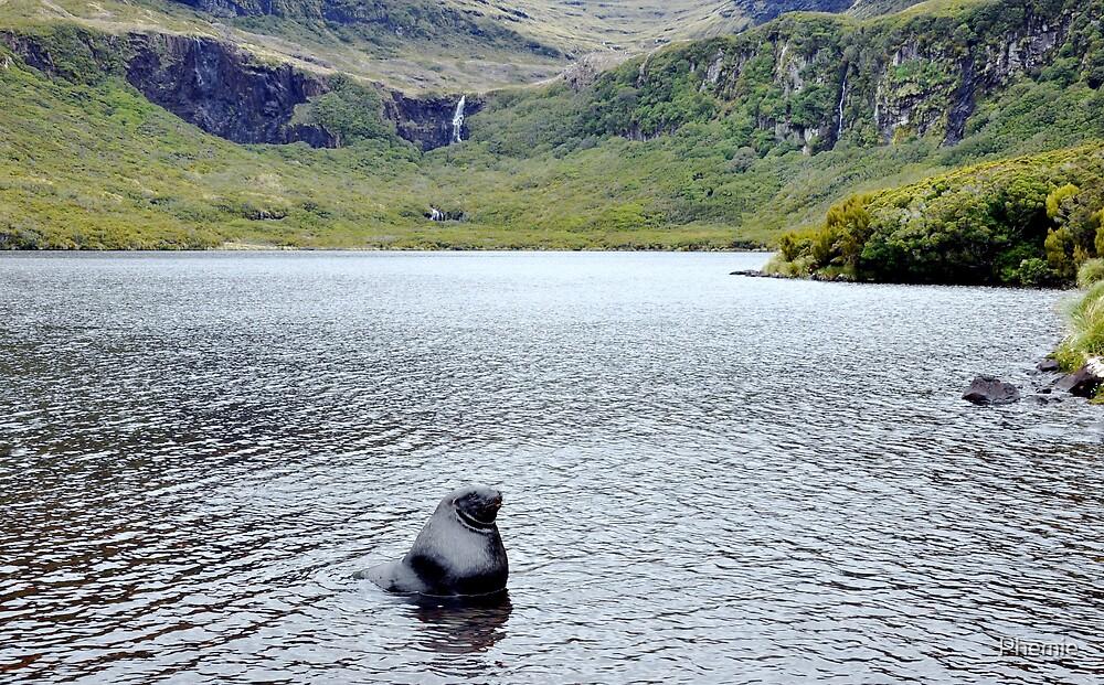 Bull in an idyllic lake by Phemie