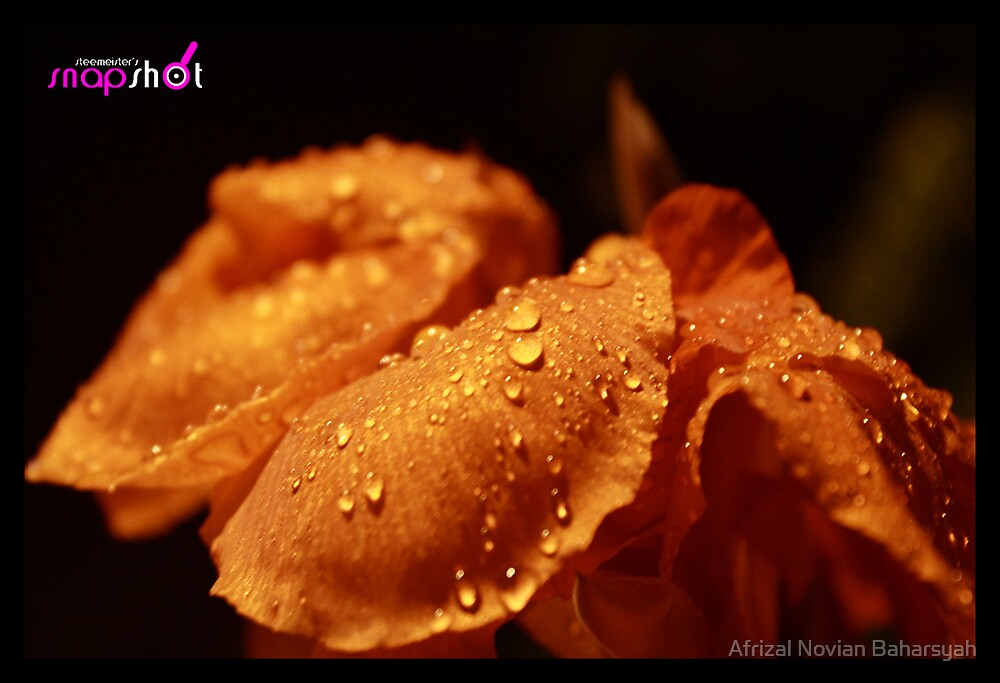 Wet Beauty by Afrizal Novian Baharsyah