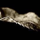 Sepia leaf by mausue