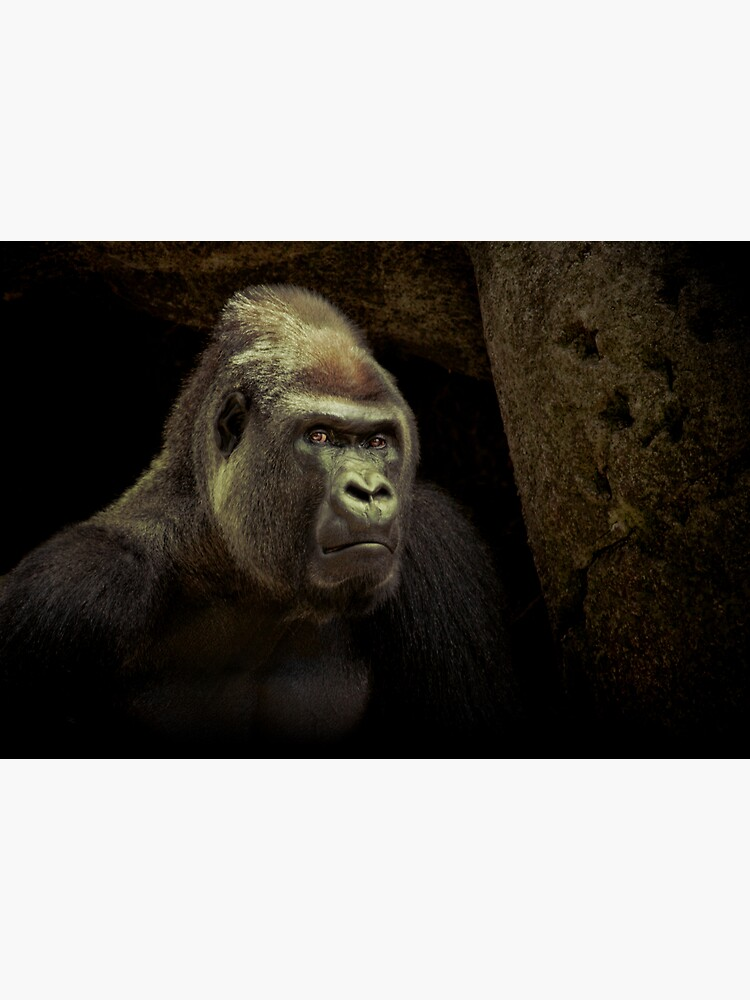 Silverback by Durberville