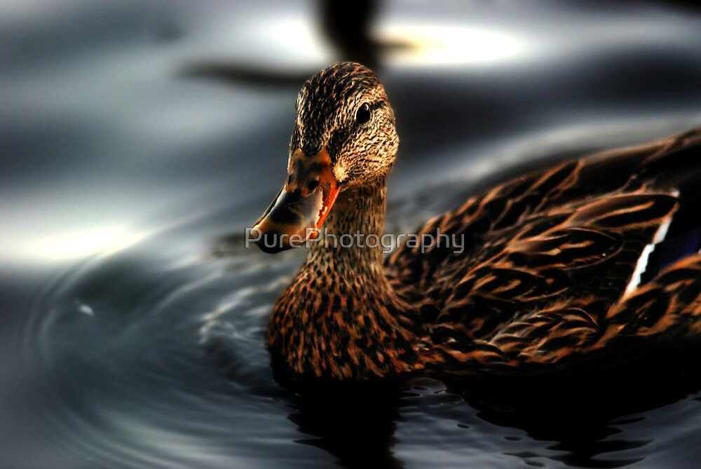 Lustrous by PurePhotography