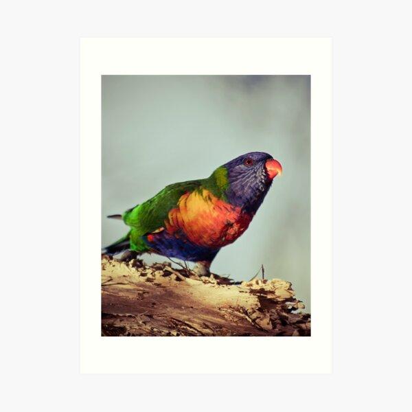 Rainbows #2 Art Print