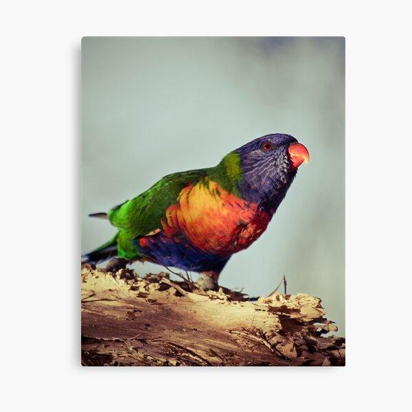 Rainbows #2 Canvas Print