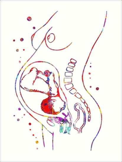 Pregnancy Pregnant Woman Anatomy Fetus Art Prints By