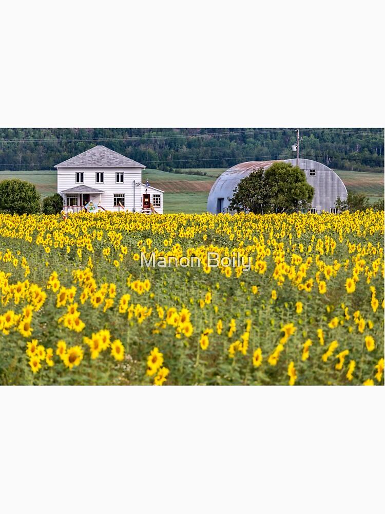 Sunflower plantation by eyelife