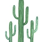 Three Beautiful Green Cacti Succulent on White Design by DesertDecor