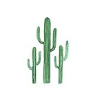 Three Beautiful Green Cacti Succulent on White Design II by DesertDecor