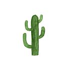 Beautiful Green Cacti Succulent on White Design II by DesertDecor