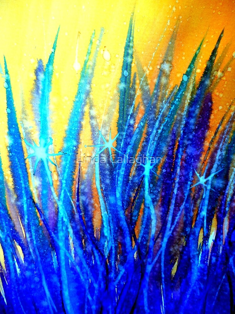 Shine  by Linda Callaghan
