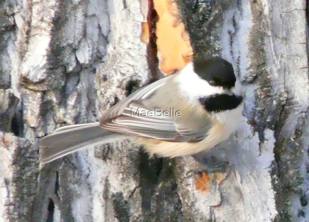 Chickadee, by MaeBelle