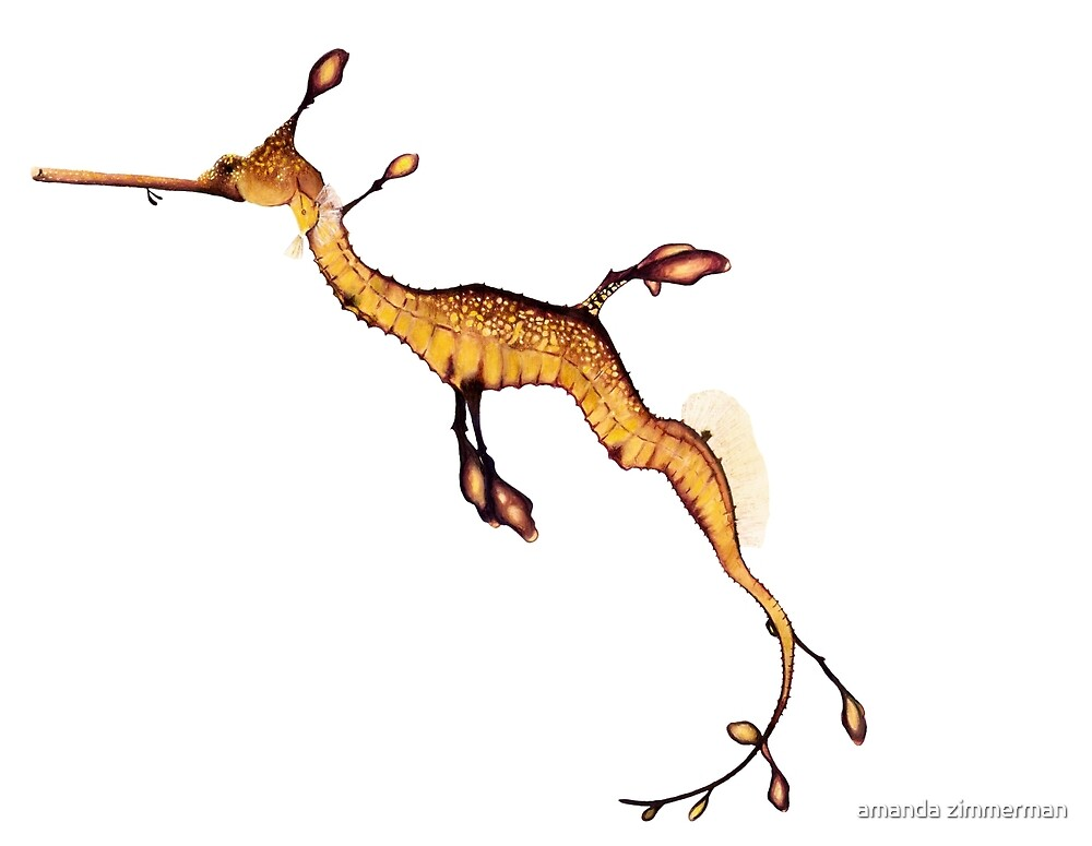 Weedy Seadragon by salamandaz