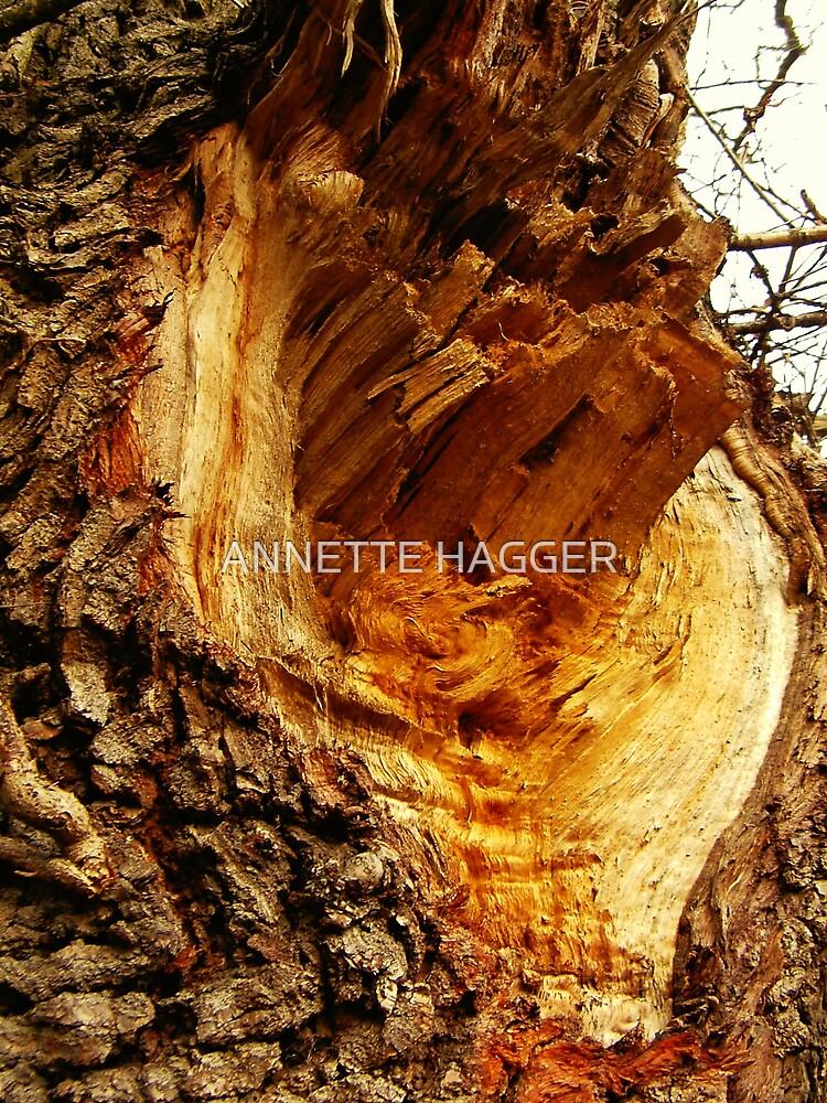 SCAR ON OAK TREE by ANNETTE HAGGER