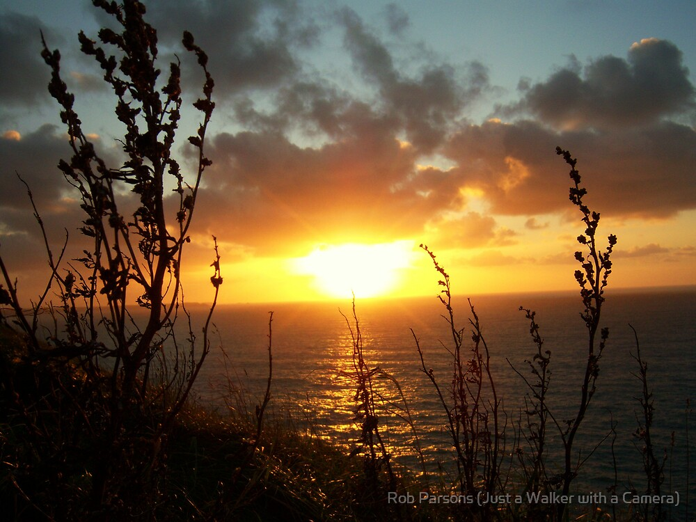 Cornwall: Sunset Through the Grasses by Rob Parsons
