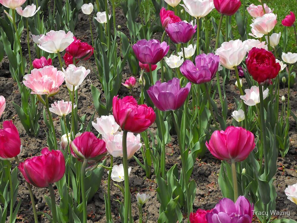 Tulips! by Tracy Wazny