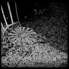 Garden Chair by Paul Desmond
