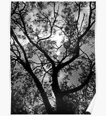 Mount Yarrowyck Tree Poster
