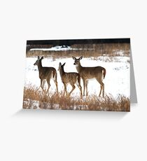 A Group of Three Greeting Card