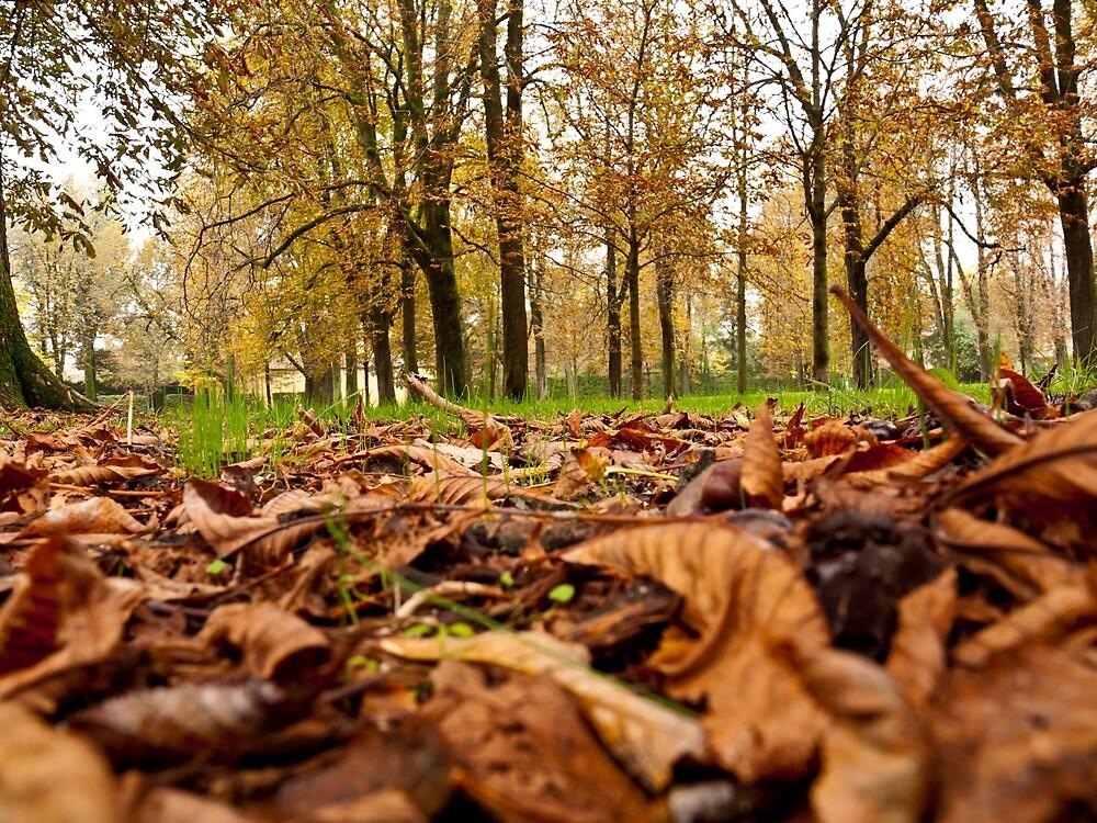 Autumn Park by Rae Tucker