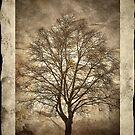 Birch Tree by Madeleine Forsberg