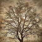Birch Tree Silhouette by Madeleine Forsberg
