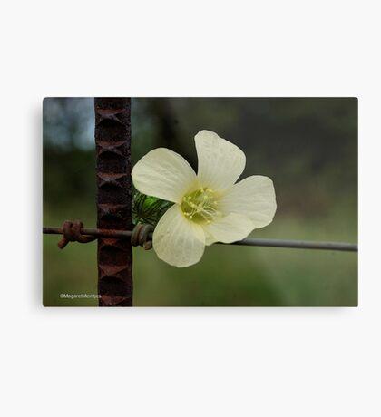 CONTRASTS IN SPRING - WILD FLOWERS Metal Print