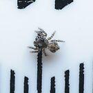 Tiny Spider by Andrew Trevor-Jones