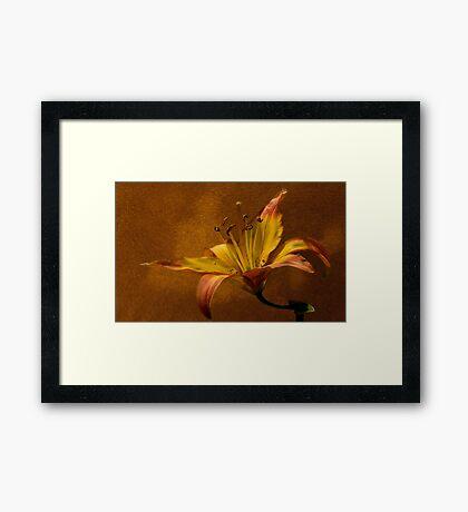 Tiger Lily Framed Print