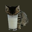 Cute Wild Kitten With A Glass Full of Optimism by taiche