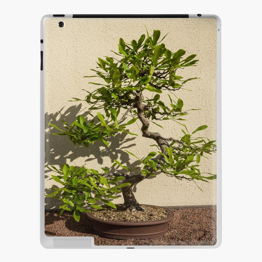 The Living Art Of Bonsai Old Twisted Beech Tree In Miniature Ipad Case Skin By Georgiam Redbubble
