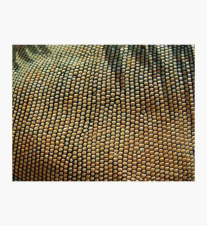 Iguana Beads Photographic Print