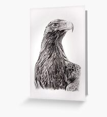 Wedge tailed eagle Greeting Card