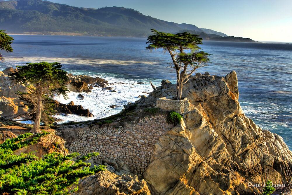 Lone Cypress at Pebble Beach by Paul J. Owen
