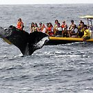 Whale tails, just a little too close. by Michelle Dry