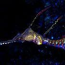 Sea dragon by Larrikin  Photography