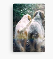 Italian Spinone Mystery in the Woods Metal Print