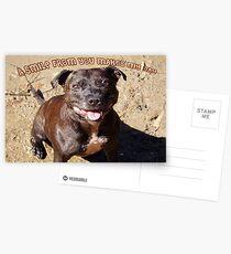 Staffie Smile Postcards