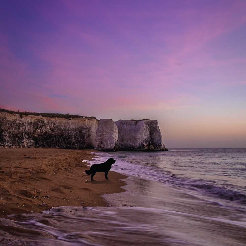 Newfoundland dog at Sunset on the Beach by Christine Mullis