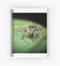 Jumping Spider Macro Spiral Notebook