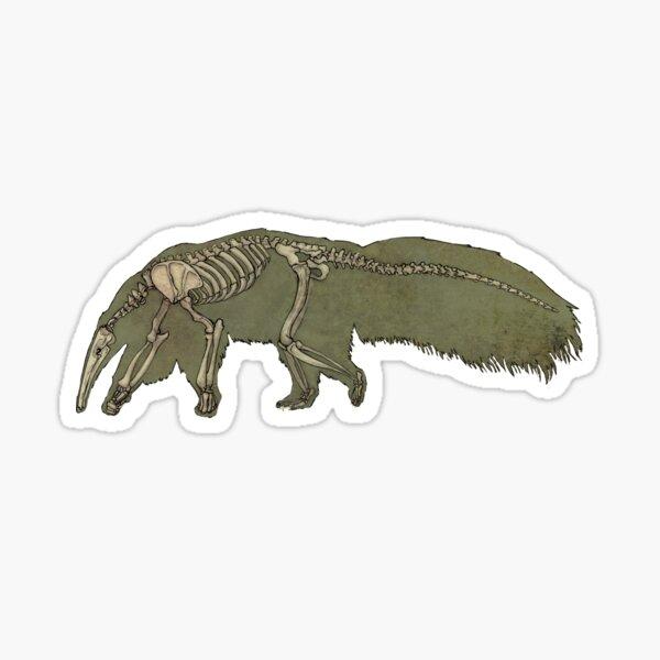 Anteater Skeleton  Sticker
