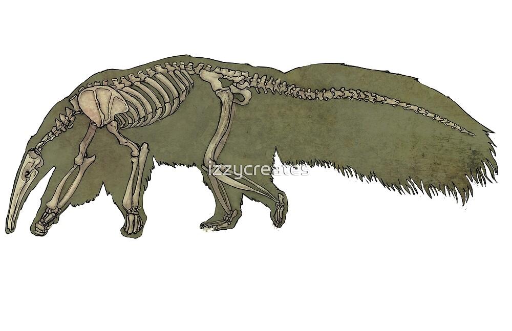 Esqueleto de oso hormiguero» de izzycreates | Redbubble