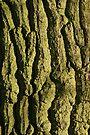 Mother nature's age lines by George Parapadakis (monocotylidono)