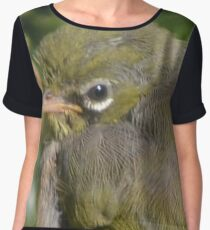 Silvereye close-up Chiffon Top