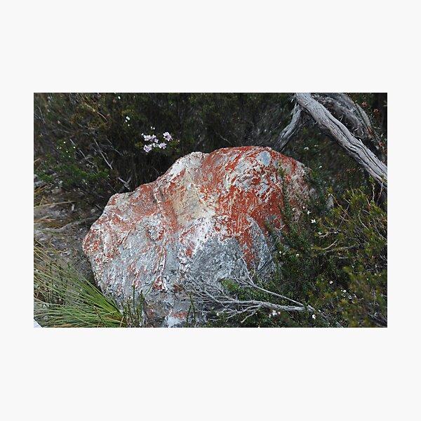 Red lichen on rock Photographic Print