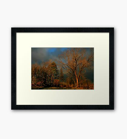 After The Fire - Treestand Framed Print
