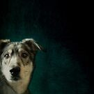 Hudson the Husky by Priska Wettstein