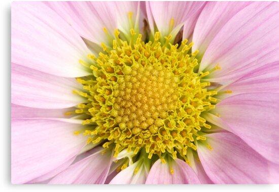Pink Flower by Christa Binder