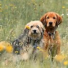 Kate and Sam - In the Meadow by T.J. Martin