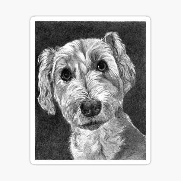 DUDLEY/ Schnoodle Sticker