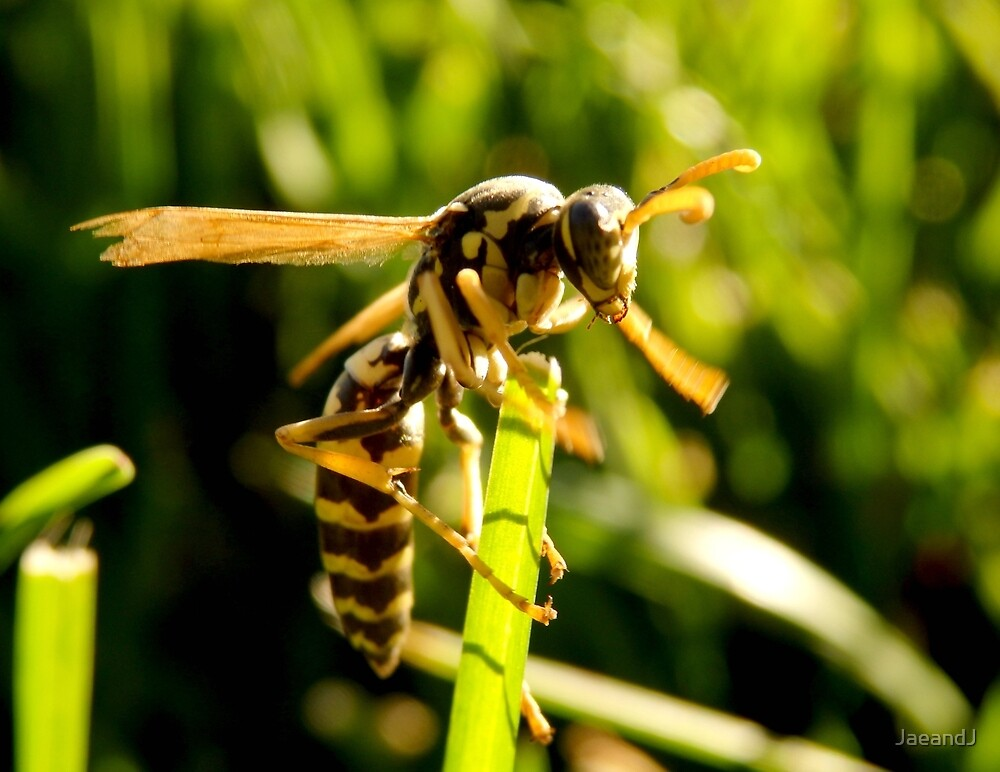 In The Grass - Wasp by JaeandJ