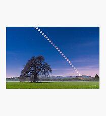 Lunar Eclipse over Oak Tree, Sonoma Photographic Print